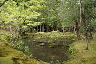étang temple des mousses